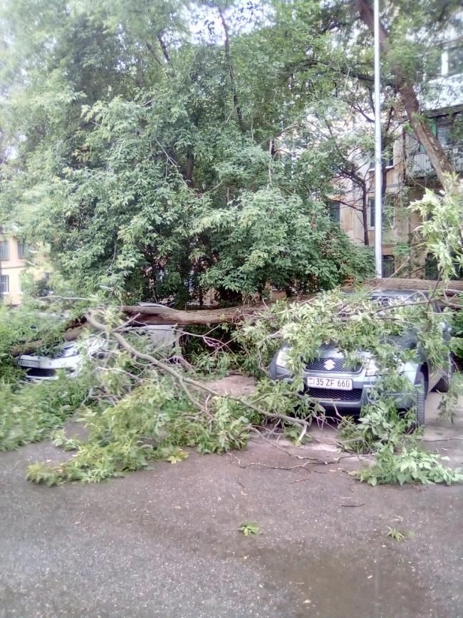 Image for Ураган обрушил деревья в Нижнем Новгороде