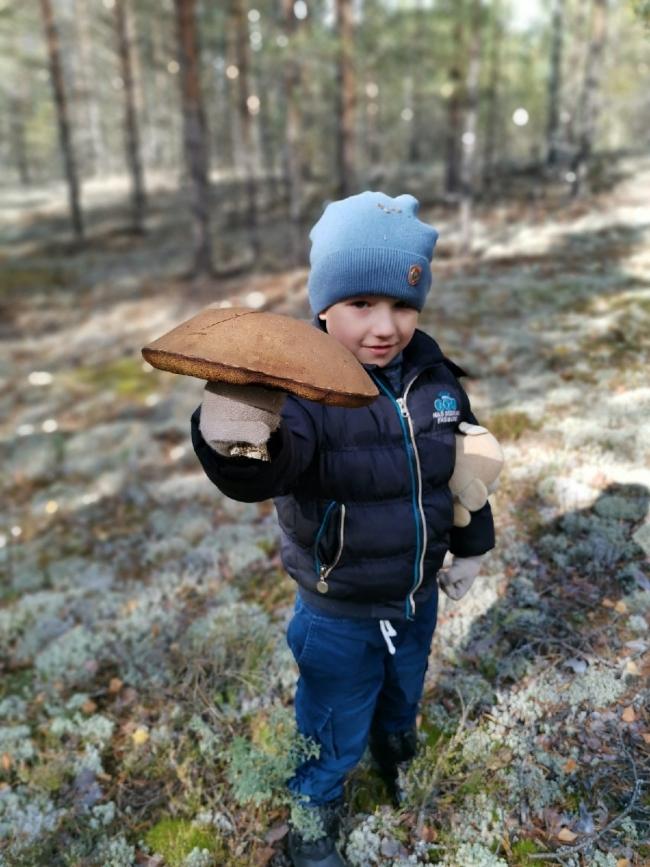 Image for «Грибы-гиганты атакуют!» — нижегородцы делятся фотографиями грибного урожая