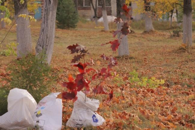 Image for На территории городской больницы №2 Дзержинска высадили саженцы деревьев