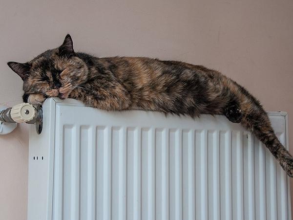 Image for Более 95% школ и детсадов обеспечили теплом в Нижнем Новгороде