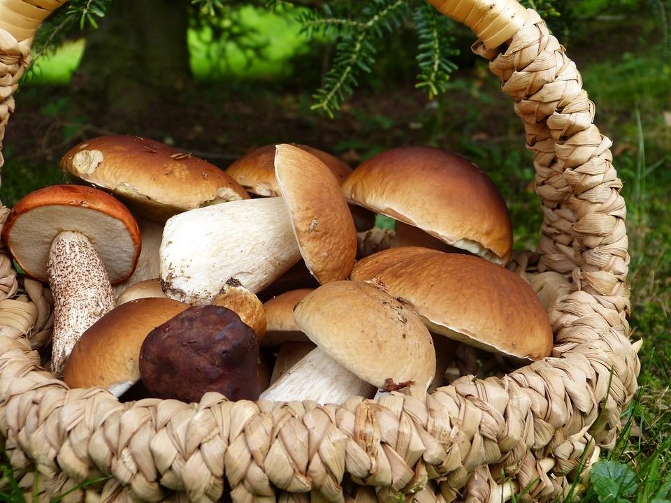 Ртуть обнаружили в белых грибах в Нижегородской области