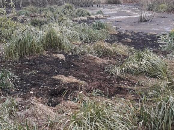 Image for Росприроднадзор ищет виновных в утечке нефтепродуктов в лесу Кстовского района