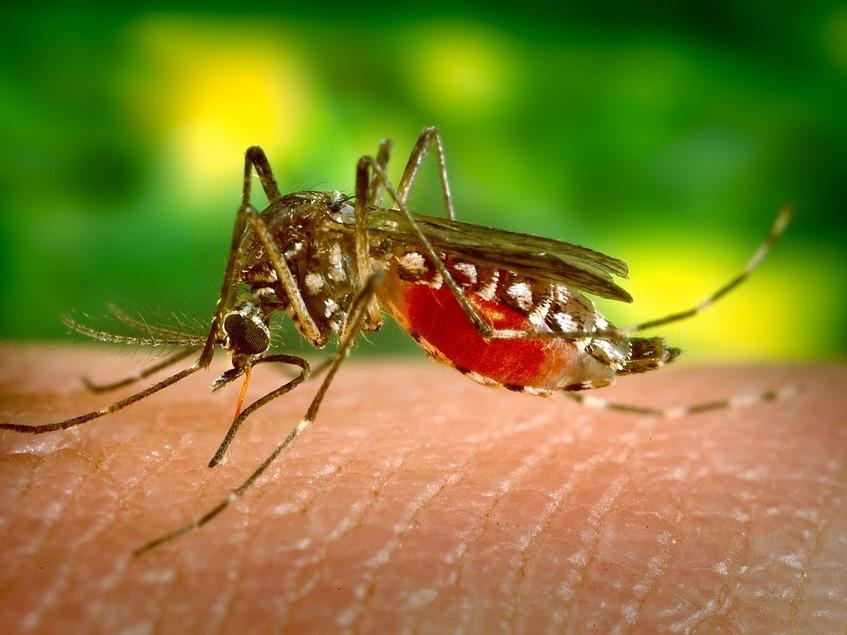 Image for Учёные изобрели способ защитить человека от комариных укусов