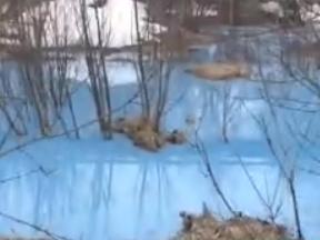 Синее озеро в Дзержинске. Химикаты