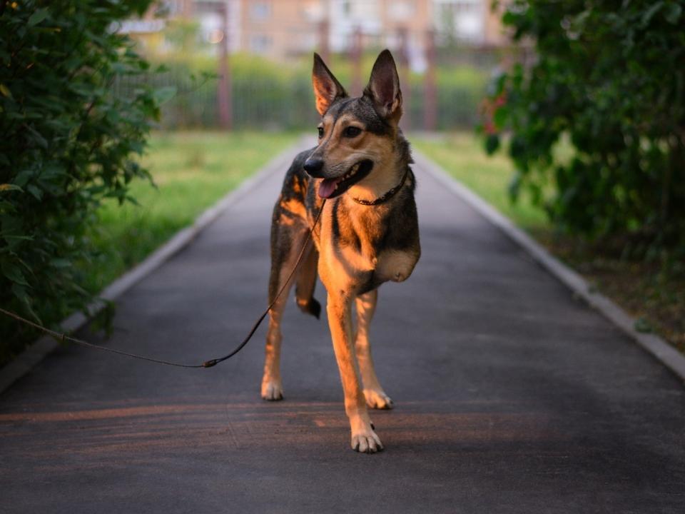 Парень, забравший трехлапых собак из нижегородского приюта, покорил интернет