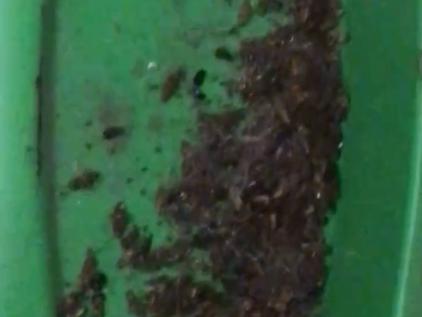 Полчища тараканов выживают из дома жителей улицы Усилова
