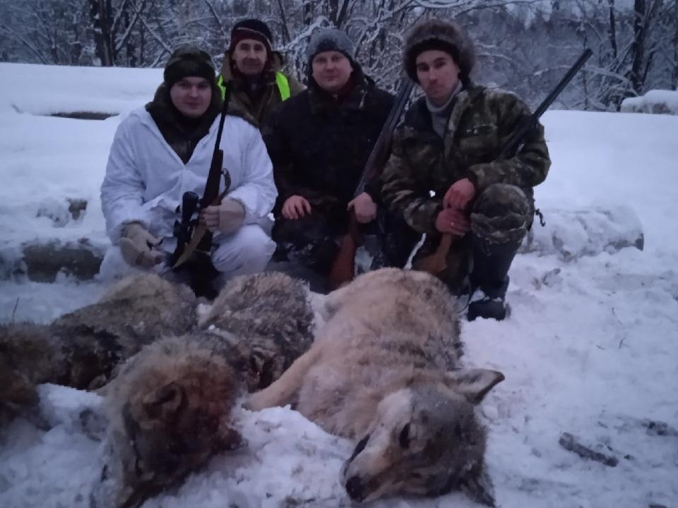 Image for За каждого убитого волка охотникам в Уренском районе выплатят по 5000 рублей