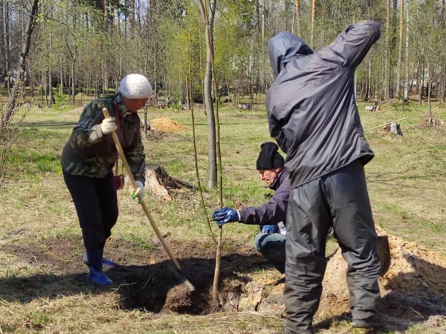 Image for 20 саженцев грецкого ореха подарил житель Выксы местному парку